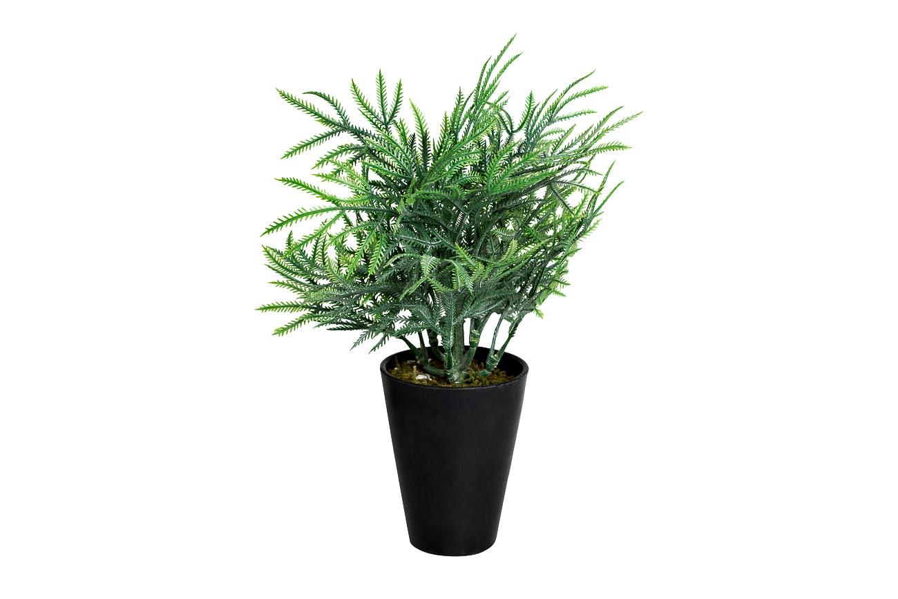 Inmyroom | Кипарисовик зеленого цвета в горшочке | Clouty