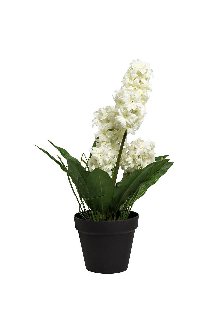 Inmyroom | Гиацинт бело-зеленого цвета в горшочке | Clouty